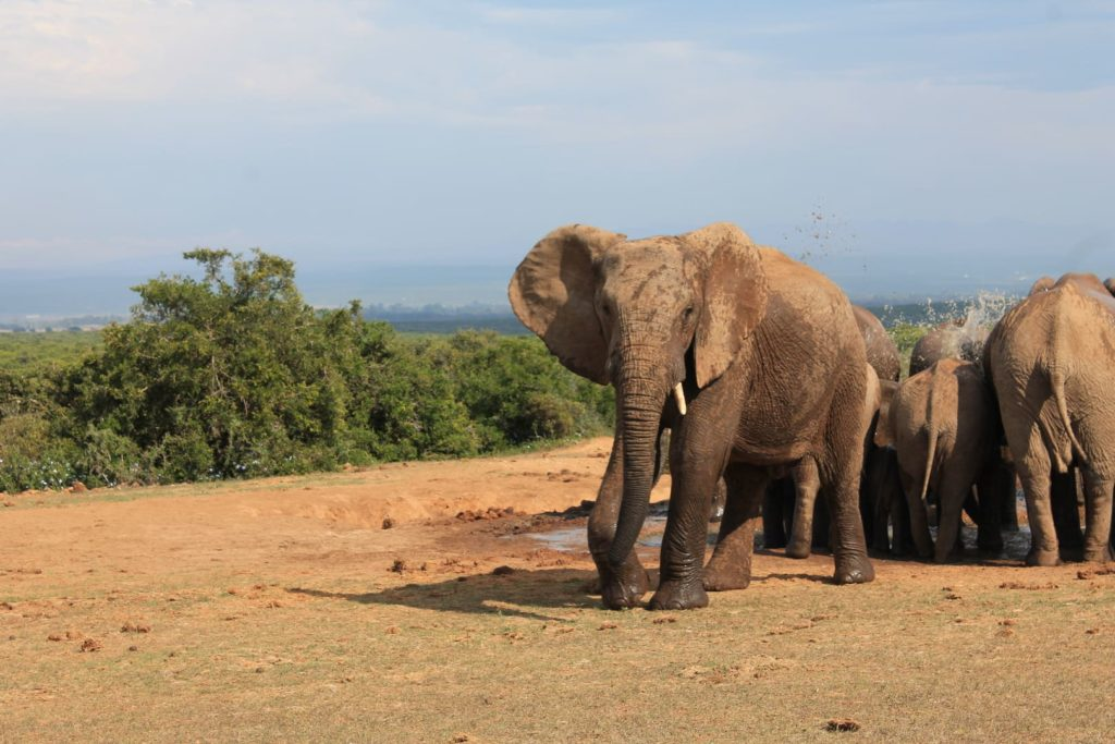 Addo Elephant Park | Südafrika Reisetipps: Reiseberichte, Routen, Tipps