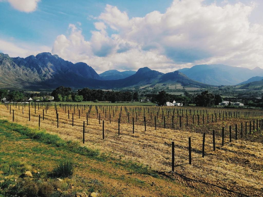 Winelands Stellenbosch | Reiseblog: Highlights und Reisetipps Kapstadt Südafrika