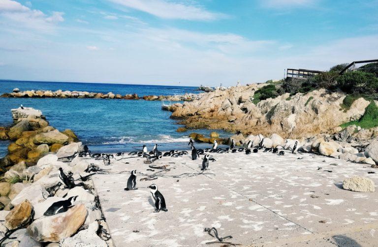 Bettys Bay | Reiseblog: Highlights und Reisetipps Kapstadt Südafrika