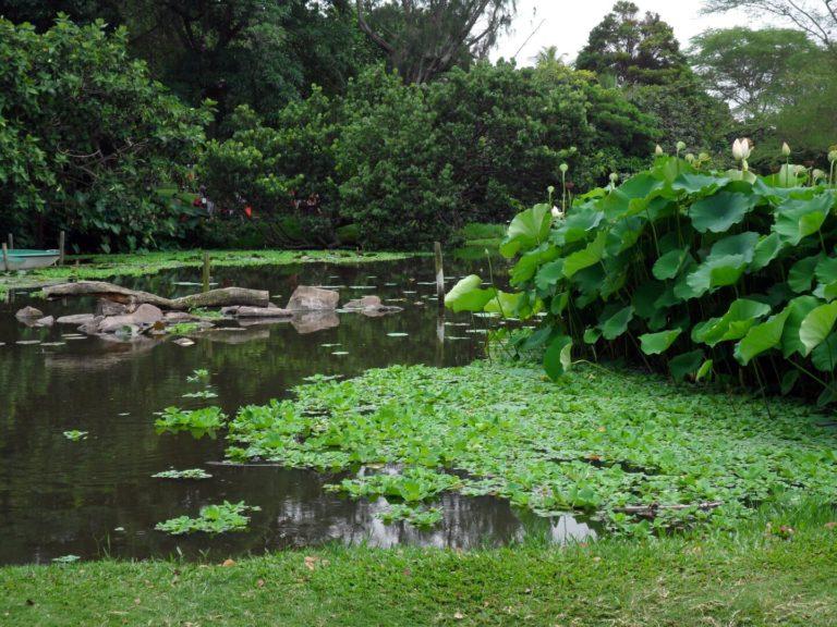 Botanischer Garten Durban   Südafrika Rundreise: Reisebericht, Reisetipps, Routen, Highlights, Reiseblog