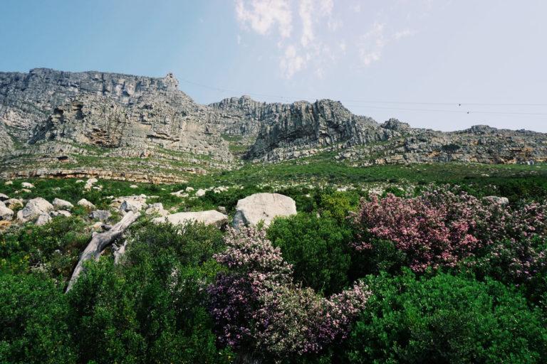 Tafelberg Südafrika | Südafrika Rundreise: Reisebericht, Reisetipps, Routen, Highlights, Reiseblog
