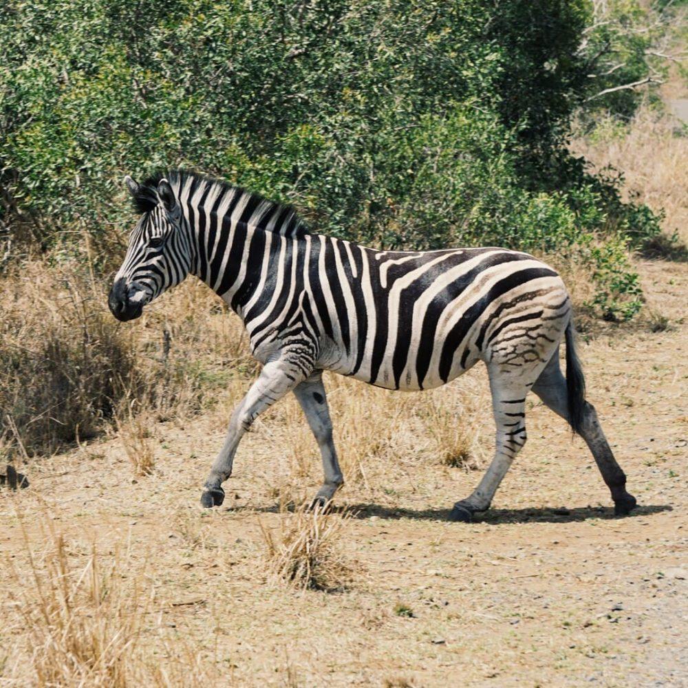 Krüger Nationalpark, Blyde River Canyon – die Highlights im Nord-Osten