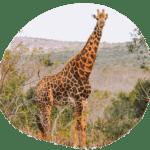 3 Wochen Rundreise Route Südafrika