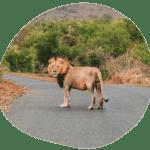 Krüger Nationalpark Südafrika – Reisetipps, Safaris,…