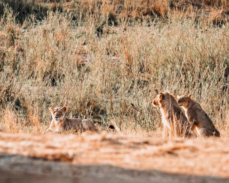 Krüger Nationalpark Südafrika - Reisetipps, Safaris,...