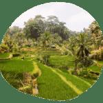 11 Highlights in Ubud