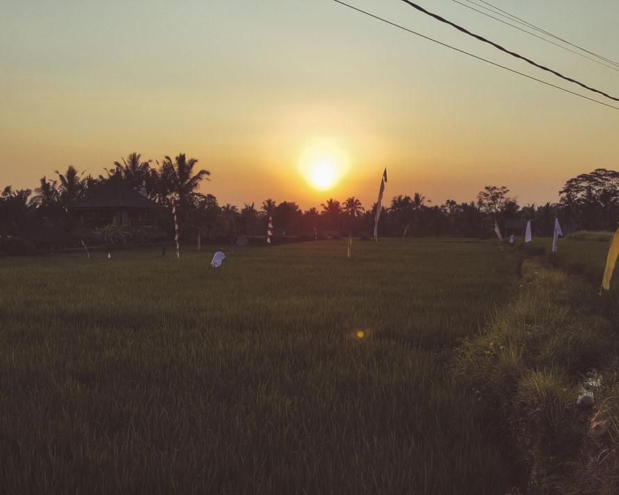 Reisfelder Ubud