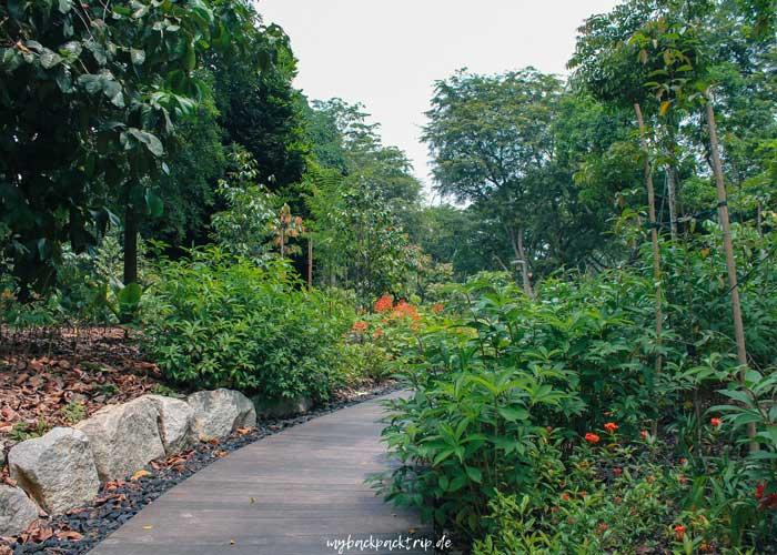 Botanischer Garten Singapur: Reisetipps & Highlights