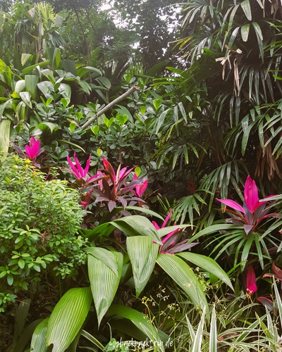 Botanischer Garten Rio de Janeiro 2