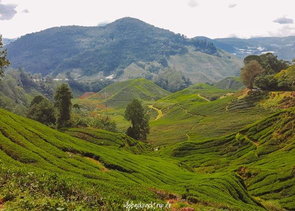 Cameron Highlands Malaysia Reisetipps