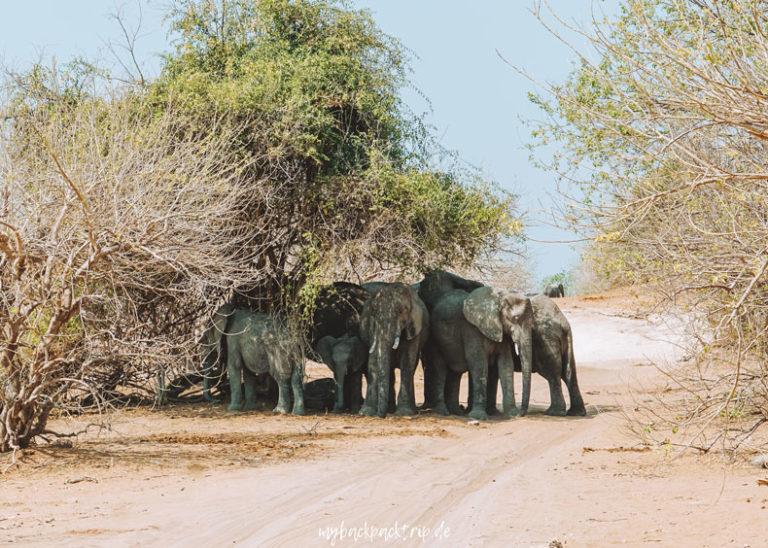 Botswana Chobe Nationalpark