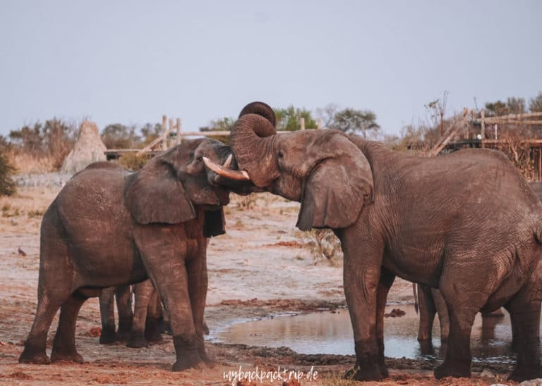 Botswana Elephant Sands