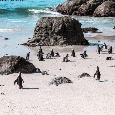 Boulders Beach - Simons Town | Reiseblog: Highlights und Reisetipps Kapstadt Südafrika