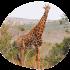 Reiseblog Krüger Nationalpark: Reisetipps und Highlights